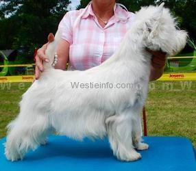 Here I am from My Westie