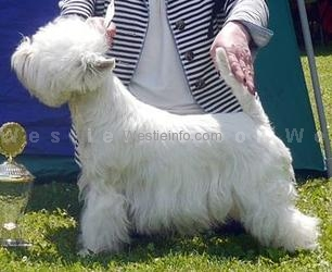 Flying Westies Diamond Daisy