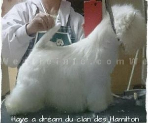 Have a Dream du Clan des Hamilton