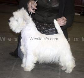 Caithness Popstar (2)