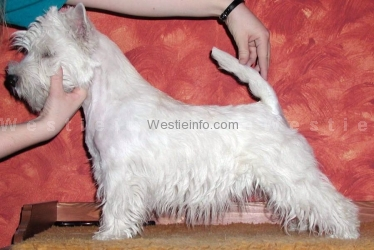 Cunningham's White Beast of Prey